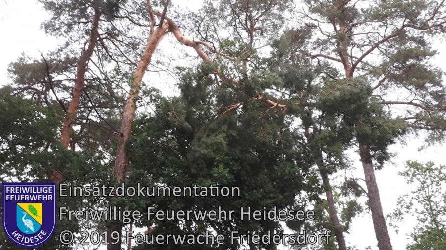 Einsatz 68/2019 | Baumkrone droht zu stürzen | Kolberg Am Karpfenteich | 12.06.2019