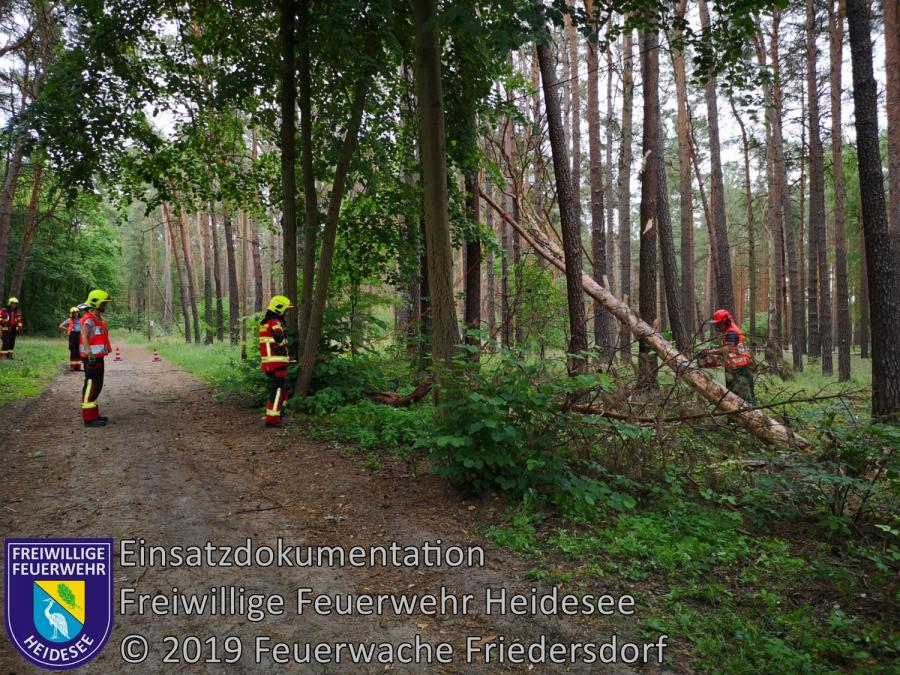 Einsatz 80/2019 | Baum in Telefonleitung | Friedersdorf Wilhelmstraße | 16.06.2019