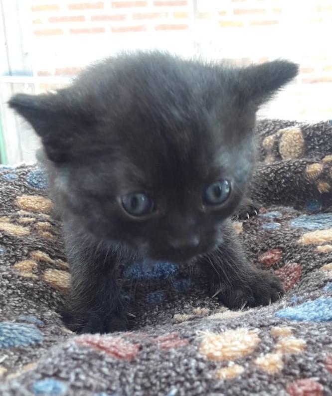 Katze-schwarz-2