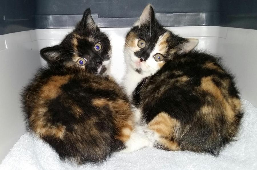 Talia und Taira