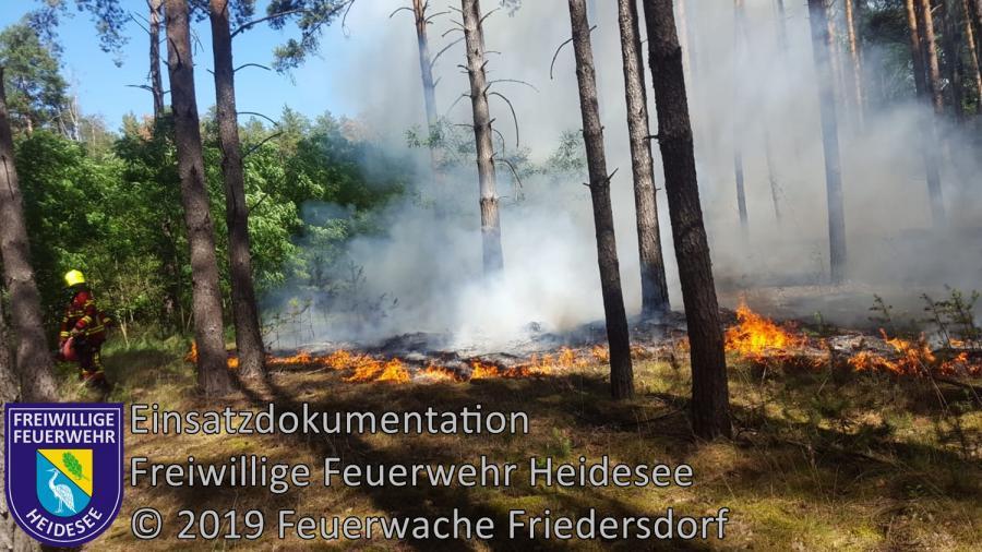 Einsatz 86/2019 | 500m² Waldbodenbrand | L 39 OV Friedersdorf - Blossin | 27.06.2019