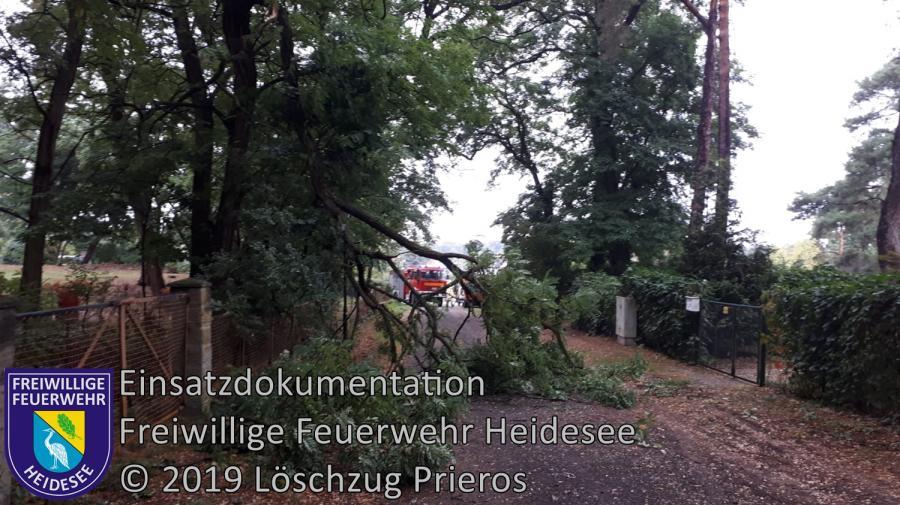 Einsatz 137/2019 | Ast über Straße | Kolberg Tannenweg | 10.09.2019