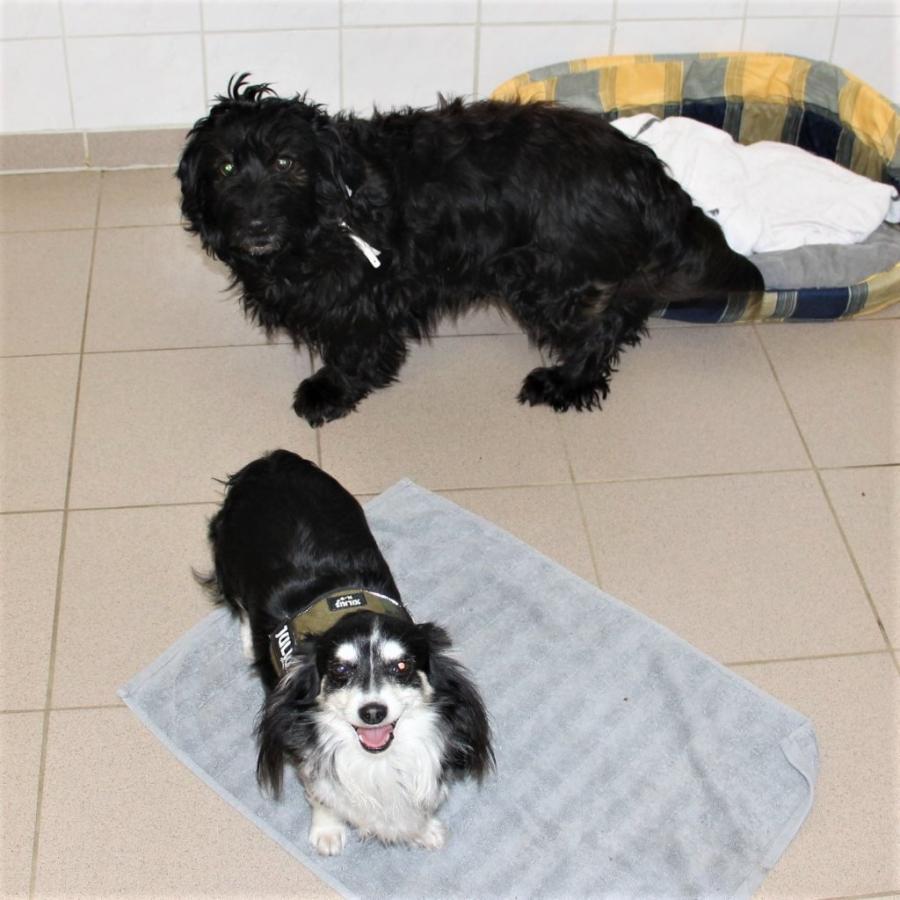 Lola & Chipsy
