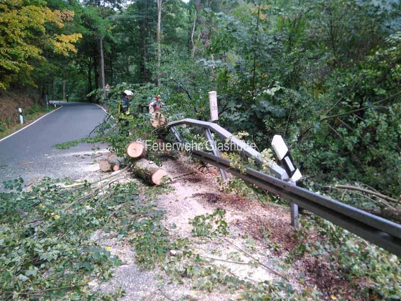 Umgestürzter Baum Hirschbach