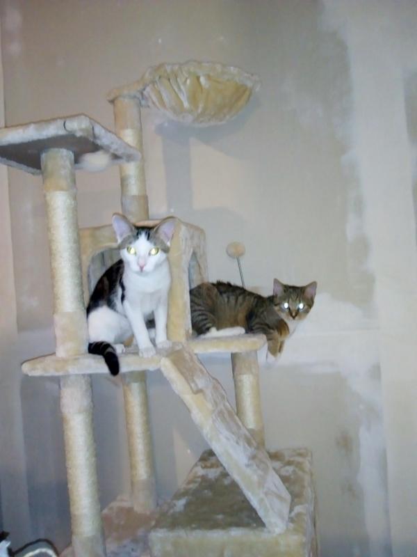 Karli & Gretel