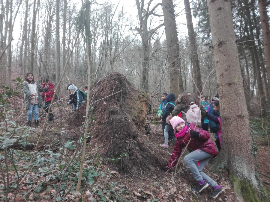 Waldspaziergang1