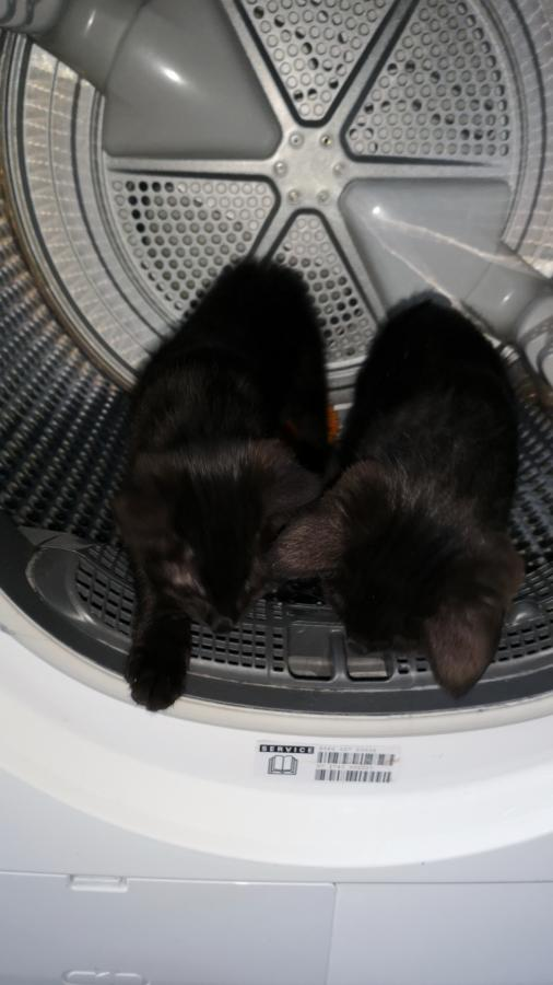 Tonks & Sirius