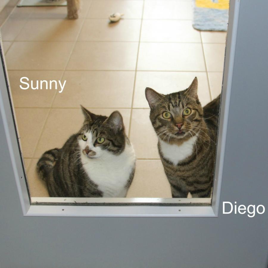 Diego & Sunny