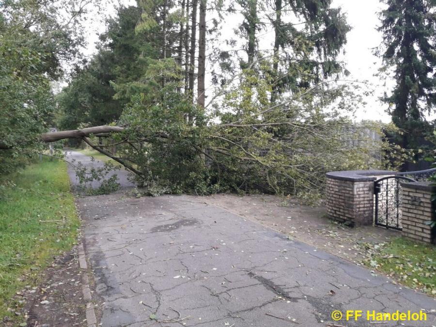 TH1 - Baum auf Straße, Fuhrenkamp