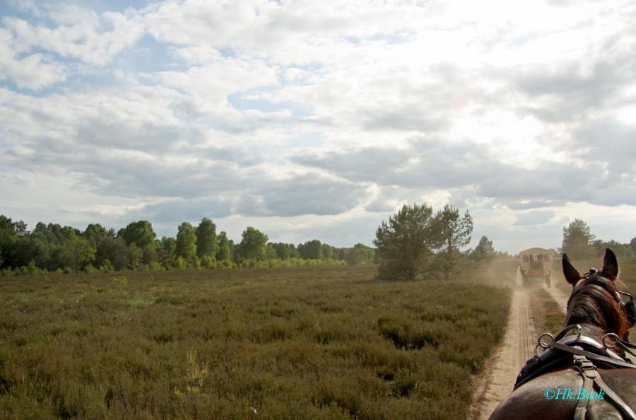 Ruppiner Heide