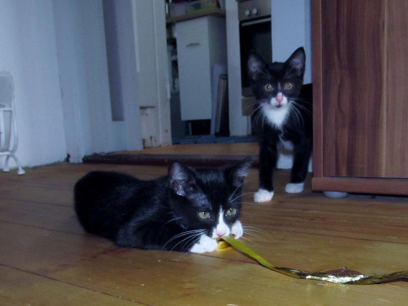 Nelly und Ella