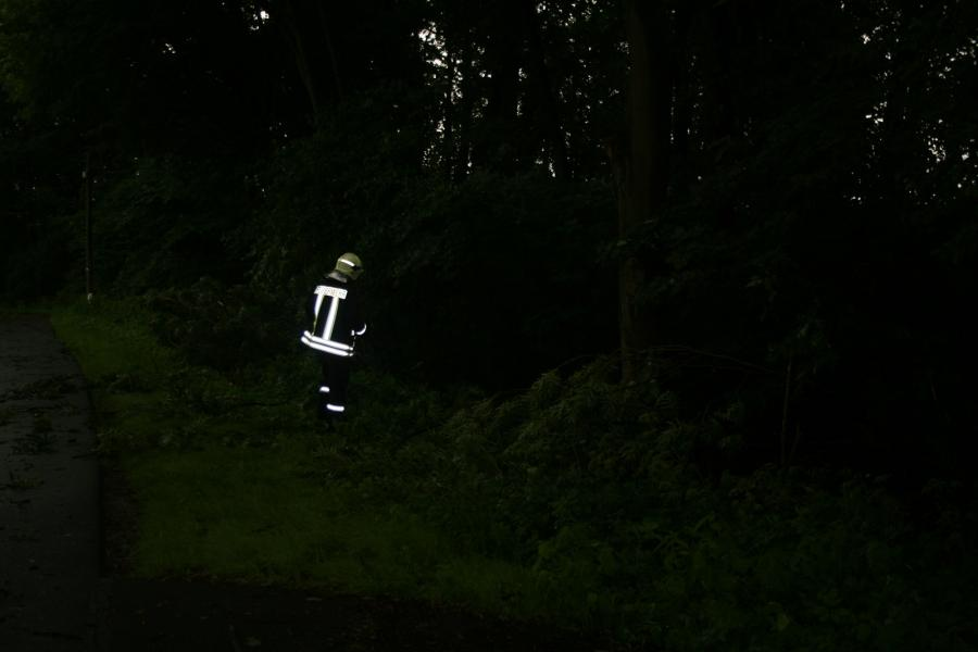 Baumsperre in Zehnebeck