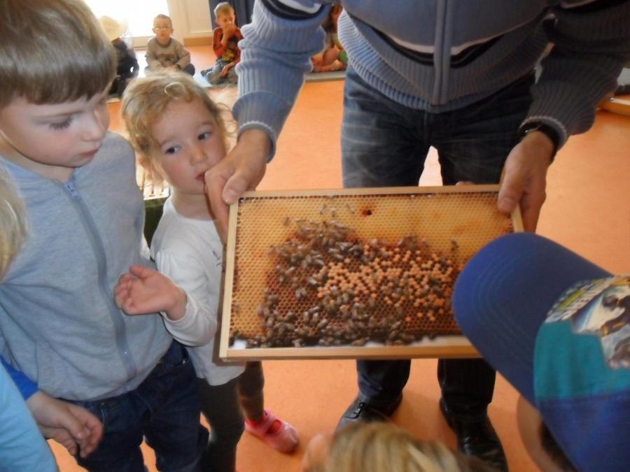 Imker und die Welt der Bienen 1