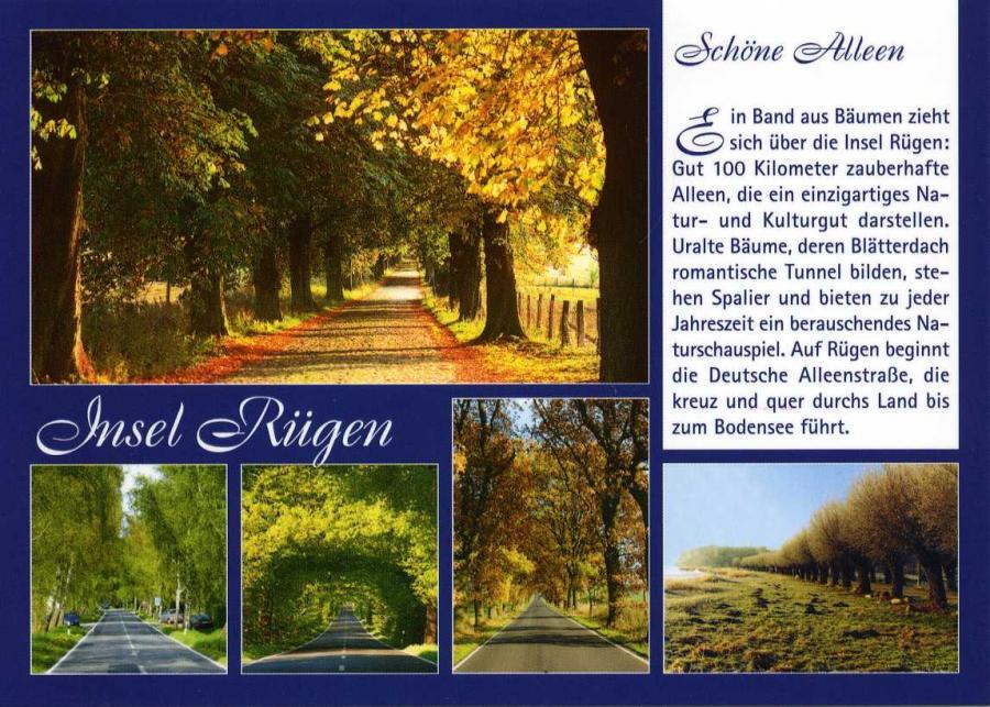 Insel Rügen Schöne Alleen