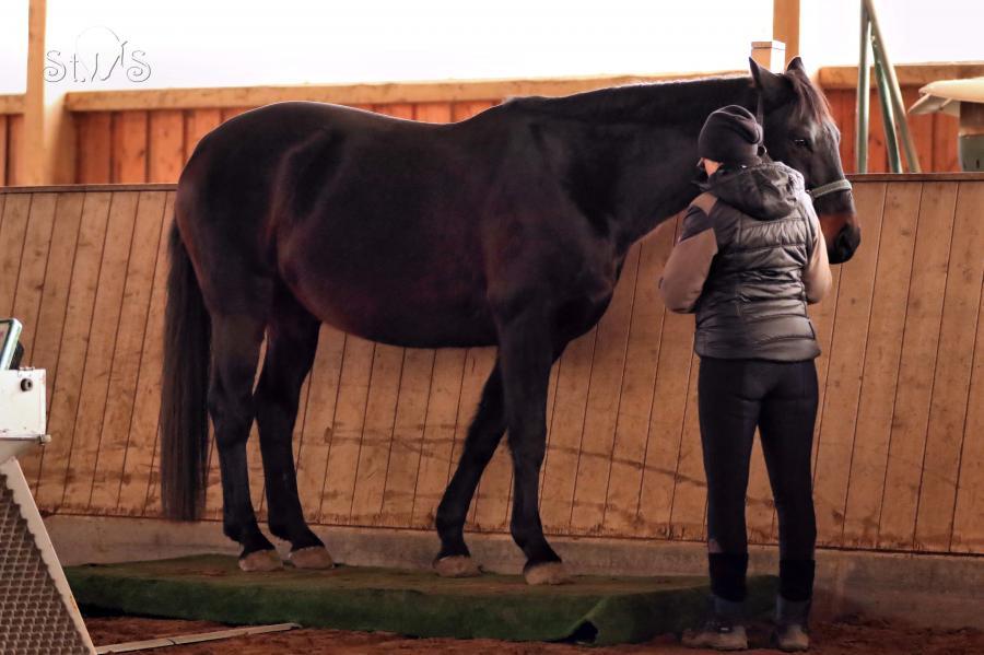Pferdewaage 2019 - Sorento