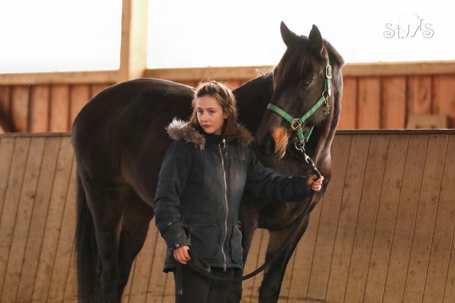 Pferdewaage 2019 - Kronos