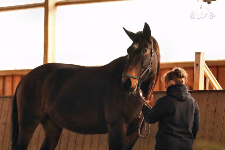 Pferdewaage 2019 - Katja