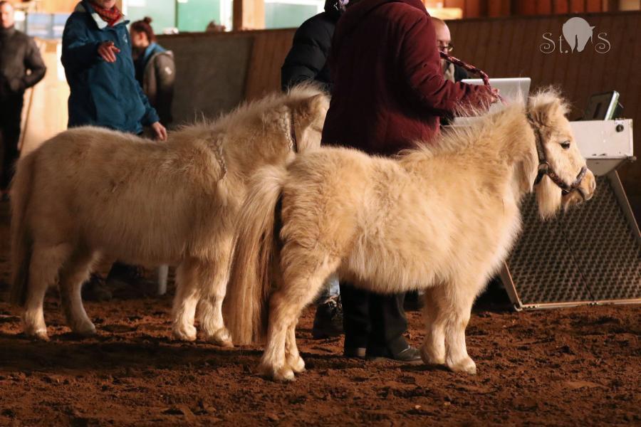 Pferdewaage 2019 - Yvy und Toscanello