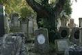 Jüdischer Friedhof Ingenheim_Foto:Abu
