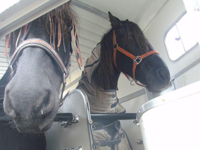 2014 Pferdeaussichten