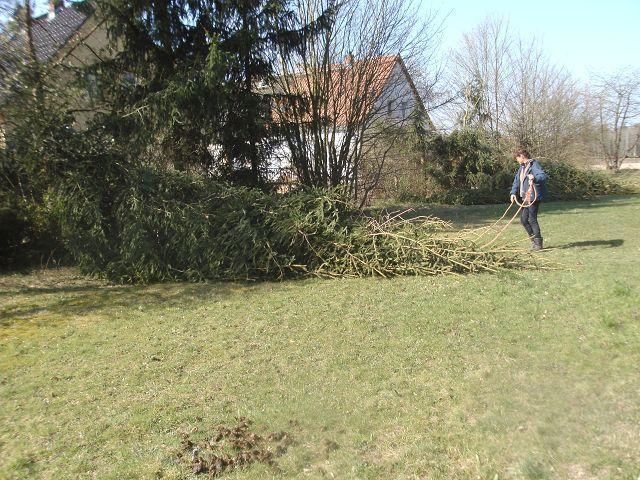 AE Baum fällt