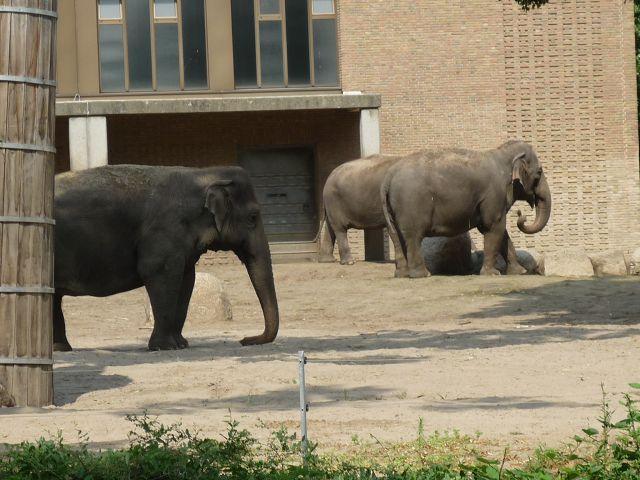 Am Elefantenhaus