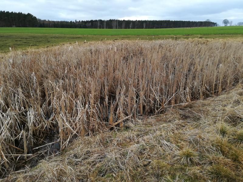 Hirschtränke Situation Frühjahr 2018 (vor der lang anhaltenden Trockenheit)