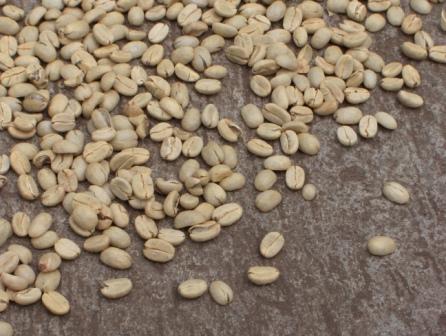 Kaffee am Trocknen