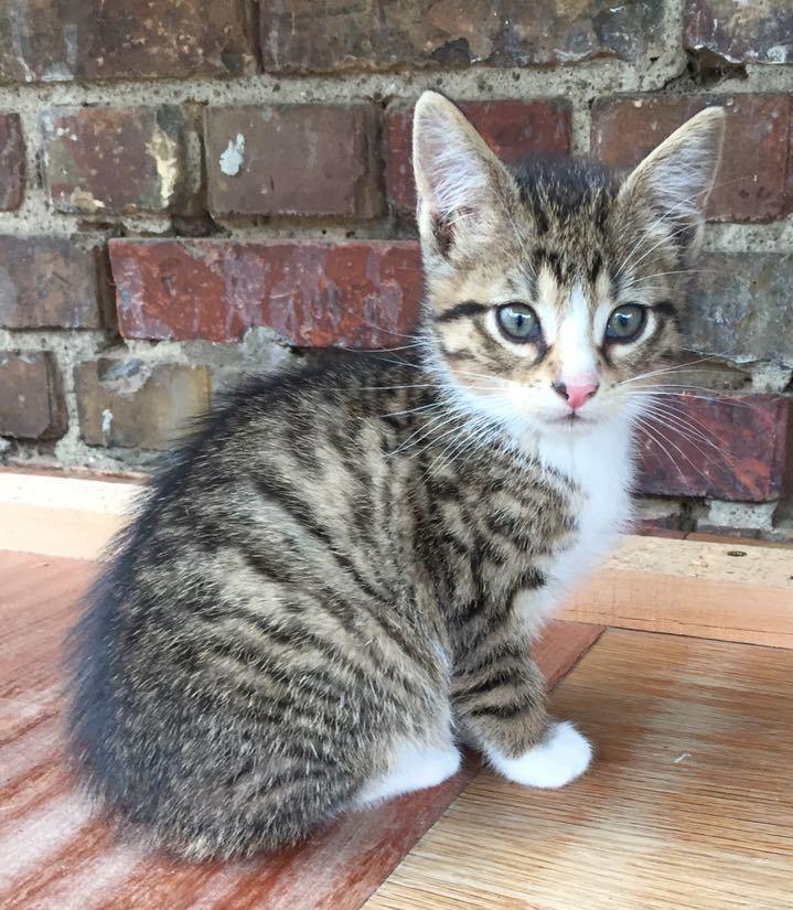 Kitten Postfrau