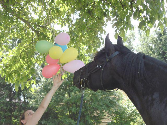 GHT 14 Luftballons