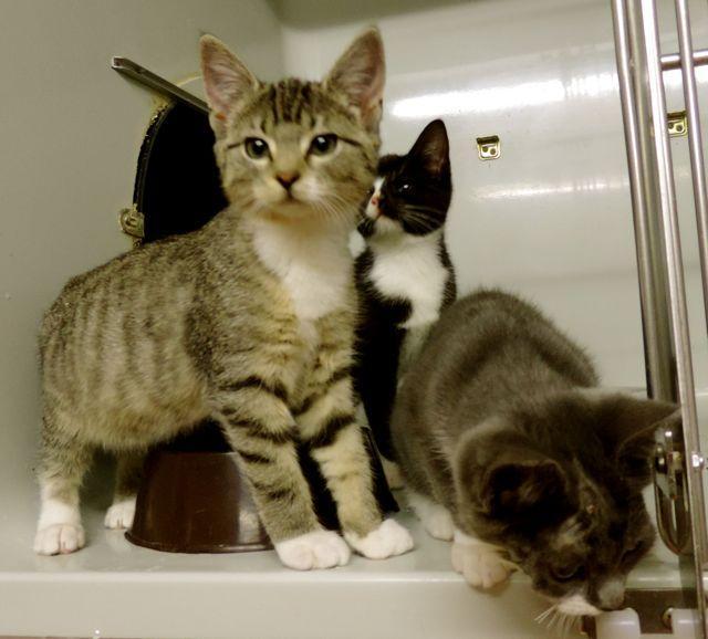 3 Katzenwelpen aus Peissen