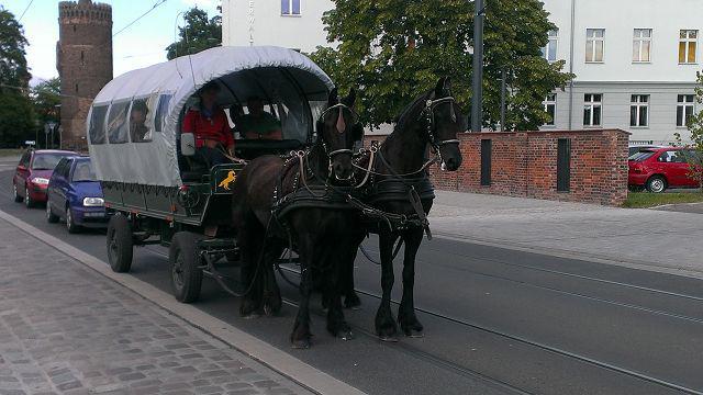 Kremser Friesen Nicolaiplatz