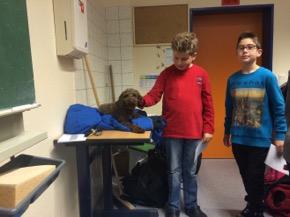 Hund im Unterricht