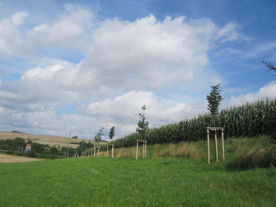 Baumpflanzung Bad Sulza