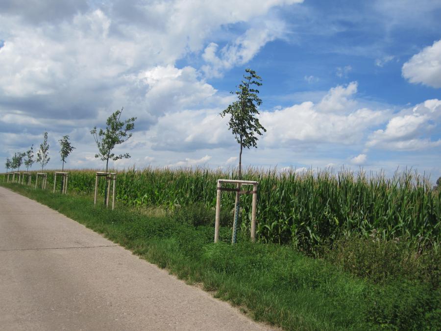 Baumpflanzung_Leutenthal