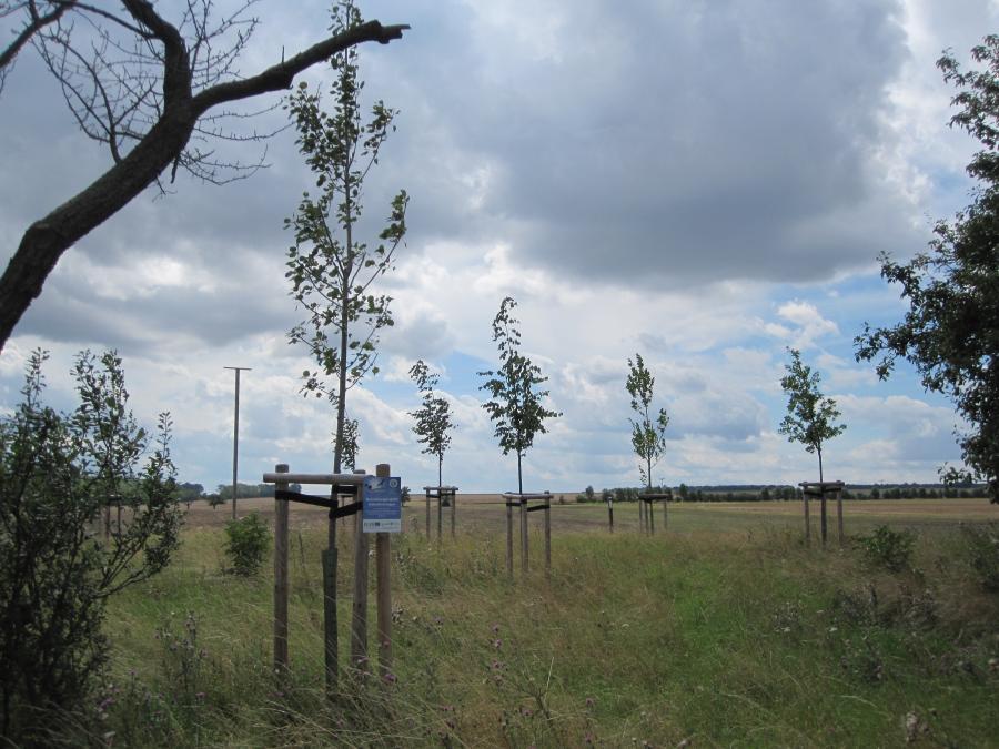 Baumpflanzung_Liebstedt
