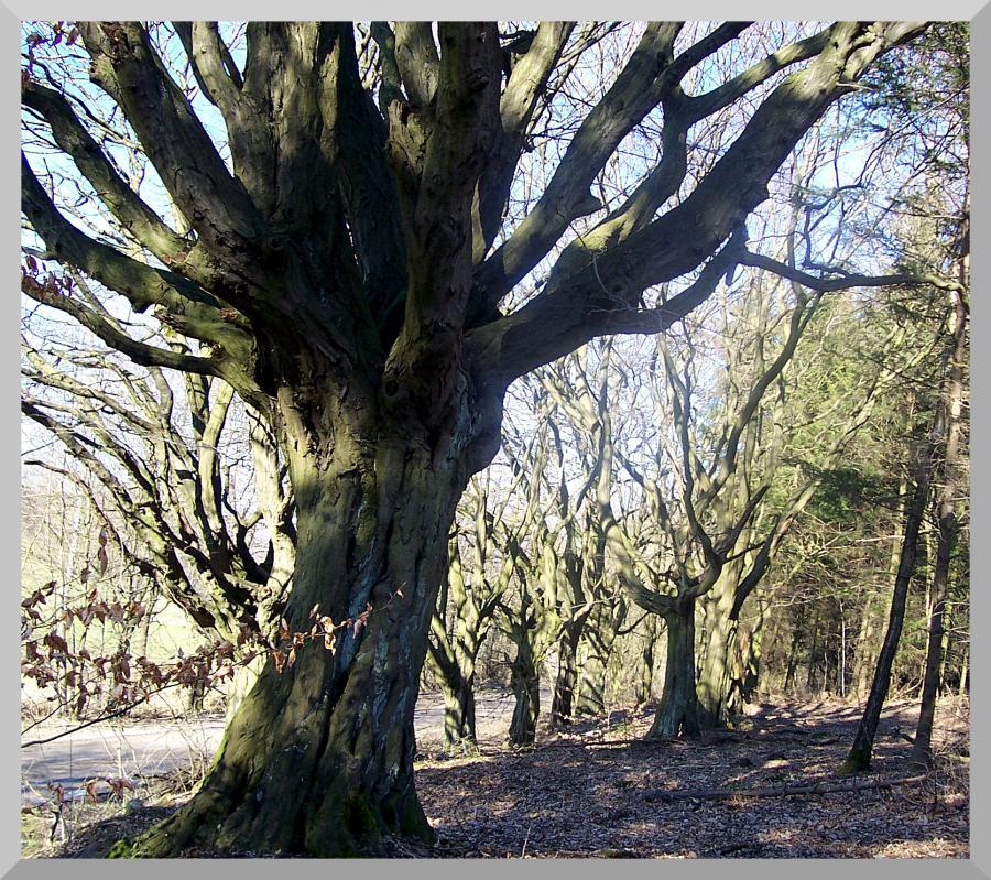 Huitewald Bühren I