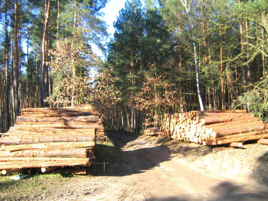 Waldpflegearbeiten