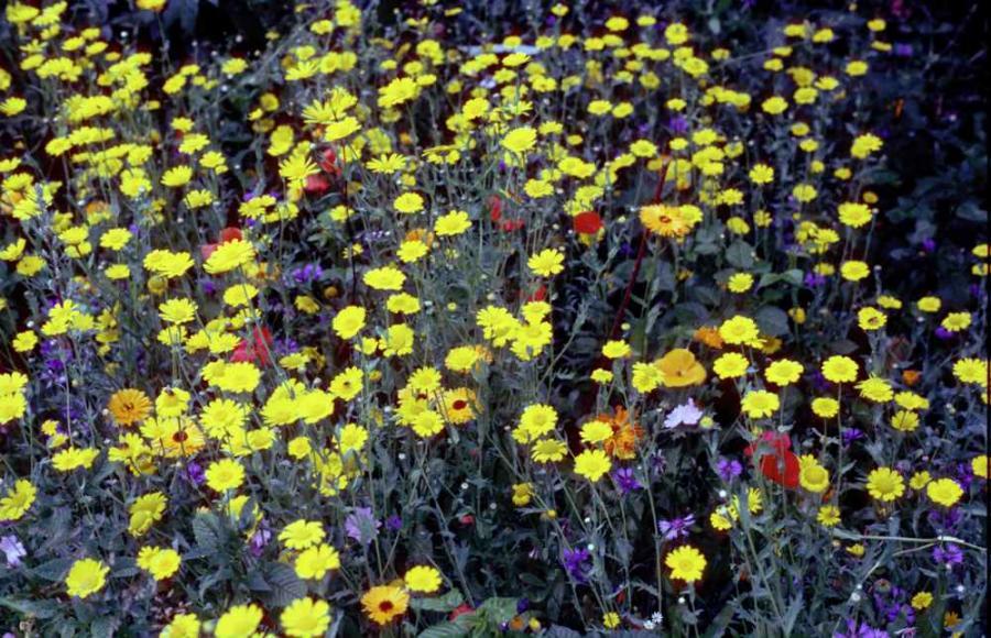 Kräuterbetonte Wiesenanlage, hervorragende Sommeräsung und ein tolles Insektenbiotop