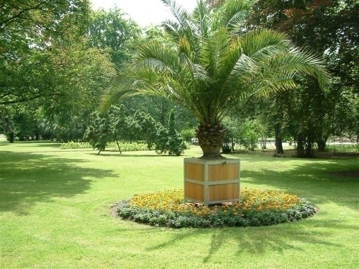Palme im Kurpark