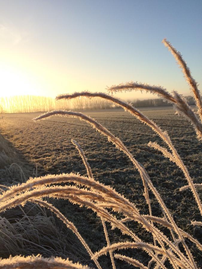 Belziger Landschaftswiesen im Winter