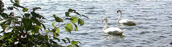 Lausiger Waldsee