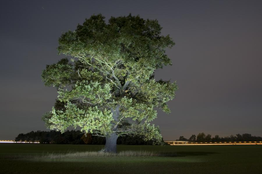Lightpainting Tree
