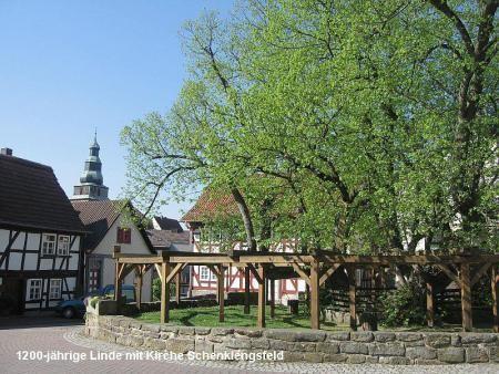 1200-jährige Linde