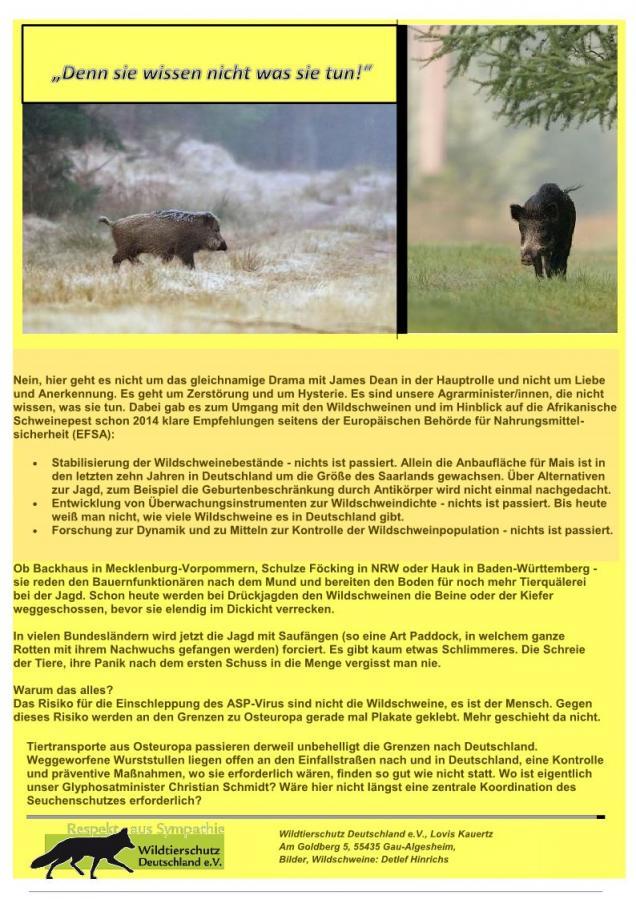 Die ASP - Freischein und vorgeschobener Grund zur skrupellosen Wildschweinjagd