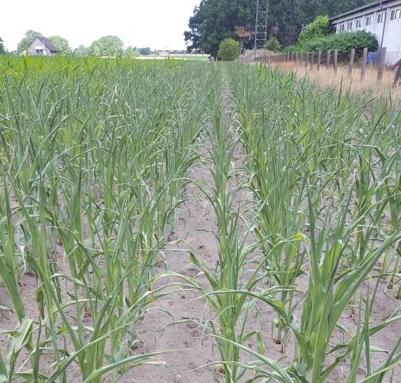 Lehrunterweisung Maisanbau