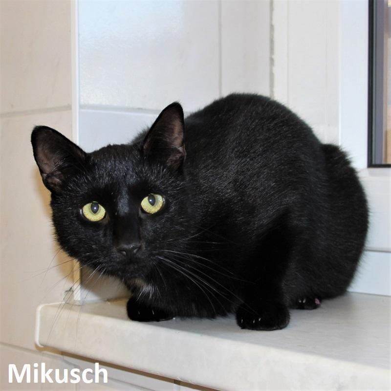 Mikusch