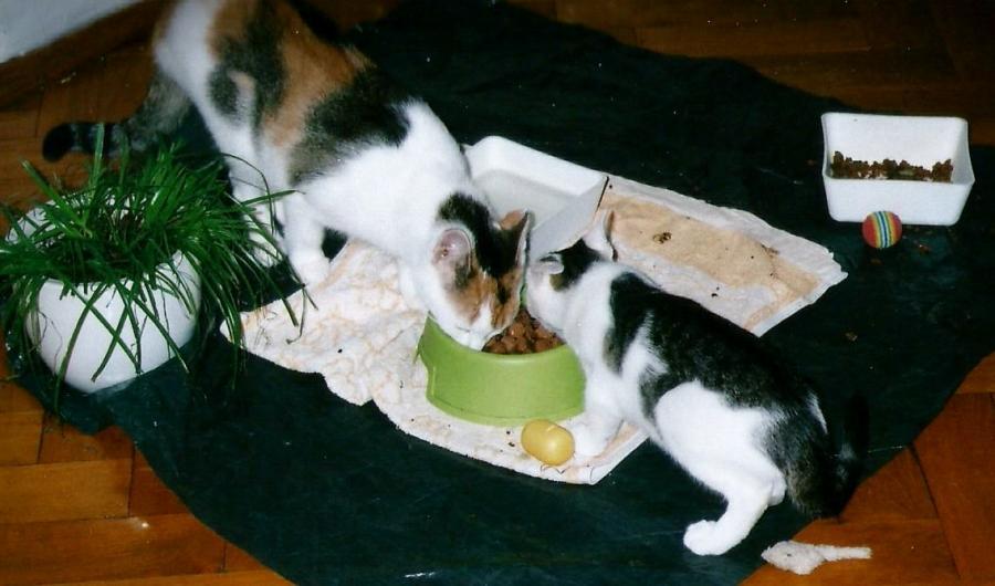 Minka & Flo