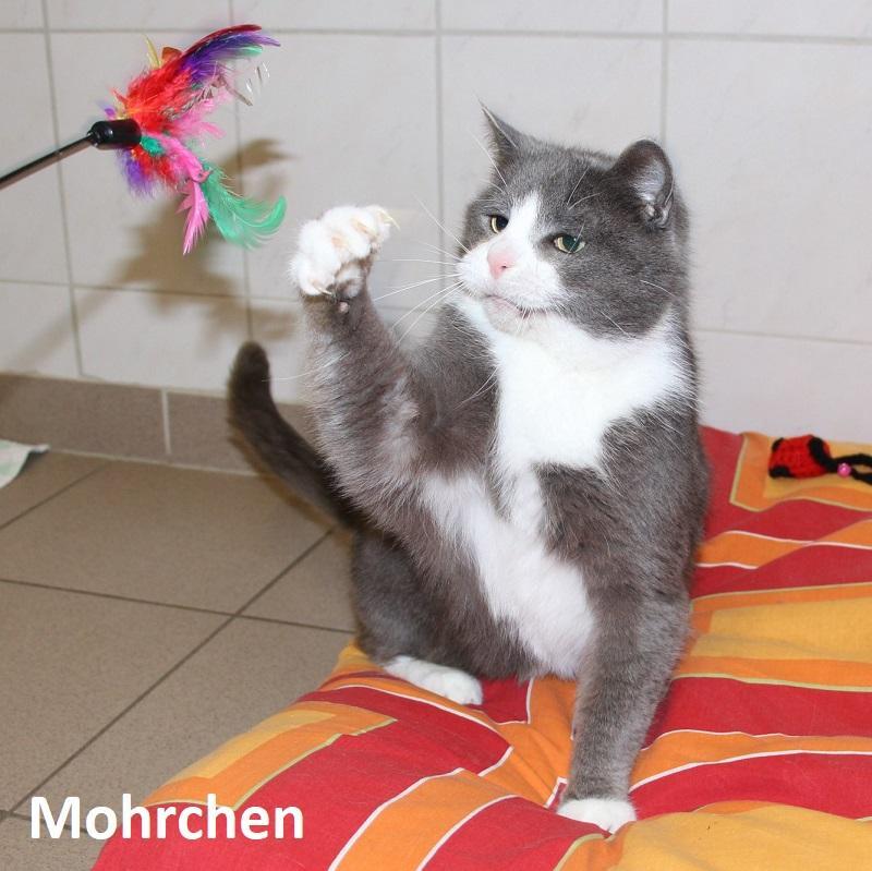 Mohrchen