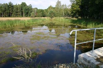 ehemaliger Feuerlöschteich zum verstärkten Wasserrückhalt und als Feuchtbiotop umgestaltet